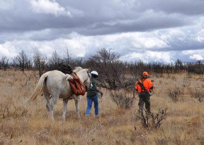 Bringing the elk home