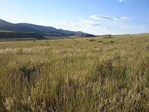 Field near Strawberry Creek