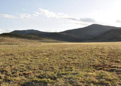 Hausser field