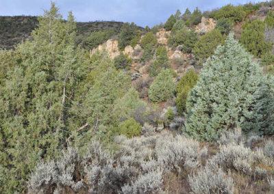 Typical cedar and pinyon habitat